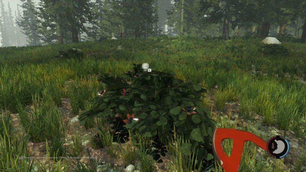 The Forest - Giftige Beeren