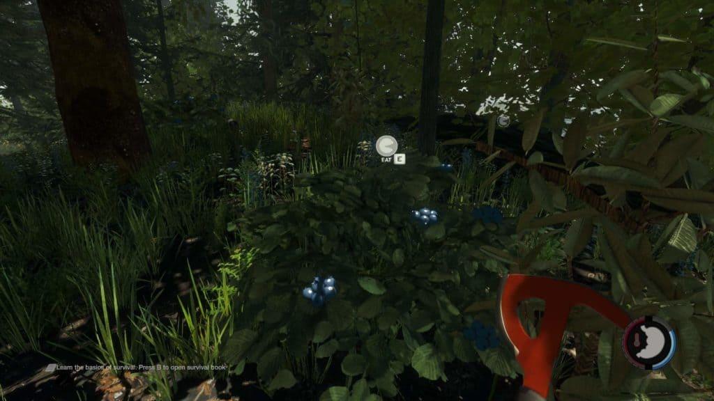 The Forest - essbare Beeren