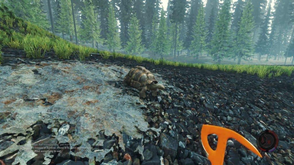 The Forest - Landschildkröte