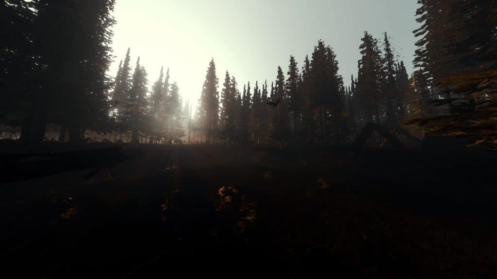 Durch eine Grafikmod entstand diese wunderschöne 200 Grad Bild des Waldes bei Sonnenaufgang